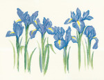 1143HC Irises  by Sue Hill Flowers Heritage Crafts