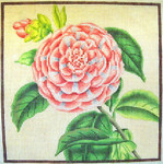 "KB 049 Kirk And Bradley Designs 13 Mesh Striped Camellia  8"" x 8"""
