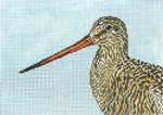 "1625 Marbled Godwit 18 Mesh - 7"" x 5"" Needle Crossings"