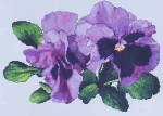 Silver Lining Lavender Pansies 183 x 129
