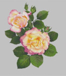 Silver Lining Peace Pink Rose