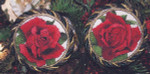Silver Lining Red Rose Ornaments 2009- September October