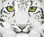 P943-W Lee's Needle Arts Snow Leopard Hand Painted Canvas - 12 Mesh 18in x 15in