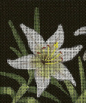 BG96SKU Lee's Needle Arts Lilies Of The Field - Leigh Design Exclusive  Hand-painted canvas - 18 Mesh