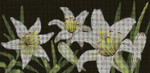 BR76SKU Lee's Needle Arts  Lilies Of The Field - Leigh Design Exclusive  Hand-painted canvas - 18 Mesh 2011 8.25in x 4in