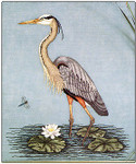 960-1389 Great Blue Heron by Crossed Wing Collection