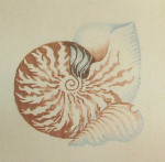 Anne Cram S-26 Chambered Nautilus 18 Count