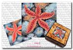 M-453 Box Top: Starfish 5 x 5 18 Mesh Shorebird Studio