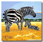 M-350 Zebras 36 x 36 13 Mesh Shorebird Studio