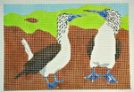 Waterweave CO1621 Blue Footed Boobies 10 x 7  13  Mesh