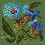 BG19 Cornflower Dark Green Background Kit  Elizabeth Bradley Designs