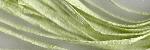 Raffia 016 Spearmint Thread Gatherer