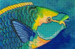 613 Green Throated Parrotfish 6 x 9 18 Mesh Purple Palm