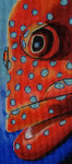 603 Jewel Grouper 4x9 18 Mesh Purple Palm Designs