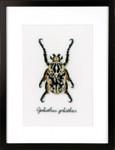 PNV165400 Vervaco Kit Beige Beetle