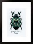 PNV165369 Vervaco Kit Blue Beetle