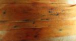 106 Klimt Twill Tape Painter's Thread