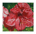 Elements Designs DH3626 - Red Amaryllis