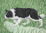 BR199 Barbara Russell Border Collie