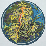 BR323 Barbara Russell Leafy Sea Dragons