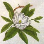 BR354 Barbara Russell Wildflower Virginia Magnolia
