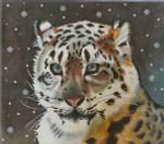 BR441 Barbara Russell Snow Leopard