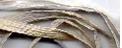 Raffia 001 Aged  Antiquity Thread Gatherer