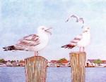 Anne Cram B-6 Harbor Seagull 14 Mesh