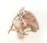 Anne Cram B-32 Snowy Owl 18 Mesh
