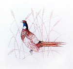Anne Cram B-20 Pheasant 14 Mesh
