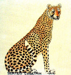 Anne Cram B-45 Seated Cheetah 14 Mesh