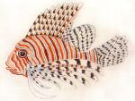 Anne Cram B-54 Lion Fish 18 Mesh