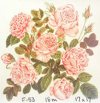 Anne Cram F-53 6 Centifolia Roses 18 Mesh