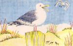 Anne Cram SM-61 Seagull Laughing 14 Mesh