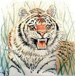 Anne Cram B-43A Tiger In The Grass 14 Mesh