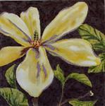 FF151 Magnolia 16x16 13M Colors of Praise
