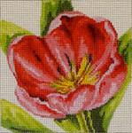 FF221 Tulip 7x7  13M Colors of Praise