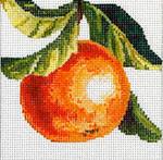 FF145 Orange 5x5 13M Colors of Praise