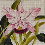 FF161 Orchid 7x7  13M Colors of Praise