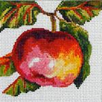 FF146 Apple 5x5 13M Colors of Praise