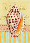 MC252 Seashell Junonia   5x7  18M Colors of Praise