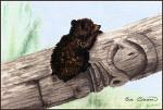 13-2833 Bear Cub by Stitching Studio, The