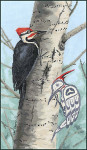 Stitching Studio, The Sue Coleman WOODPECKER includes 1/2 and 3/4 stitches