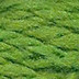 Wool 059 Treetop Planet Earth