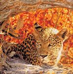 10-2498 Hiding Leopard by Kustom Krafts