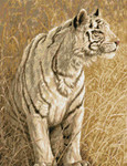 09-1922 White Light (Tiger) by Kustom Krafts 196 x 252