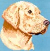 01-2492 Labrador Retriever-Yellow by Brenda Franklin Designs