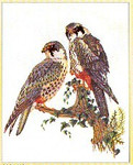 "GOK2024 Thea Gouverneur Kit Falcons 19"" x 24""; Linen; 30ct"