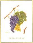 """GOK2086 Thea Gouverneur Kit Grape Vine 10"""" x 14""""; Linen; 36ct"""