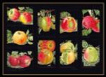"GOK2082B Thea Gouverneur Kit Apples 18"" x 12""; Aida; 18ct"